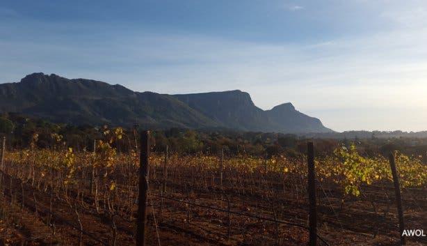 Groot-Constantia-Vineyards-2.jpg