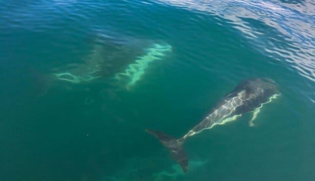 dolfijnen naast de boot