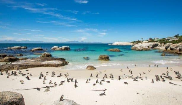 kiff_kombis_cape_point_penguins_2019