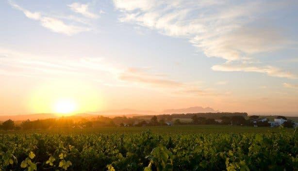 Eikendal Weintaufe Harvest Celebration