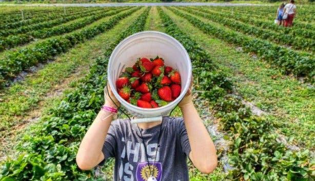 Redberry Farm 5