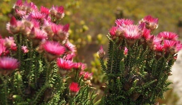 Fernkloof hike | Fynbos