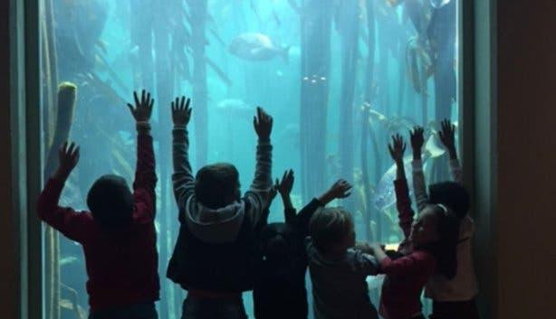 Vista Parties Two Ocean Aquarium 10
