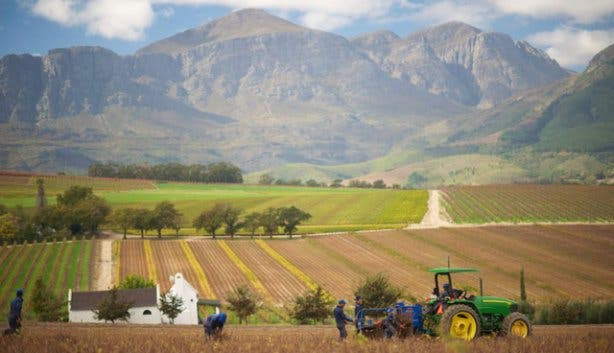 Bosman Vineyards in Wellington South Africa