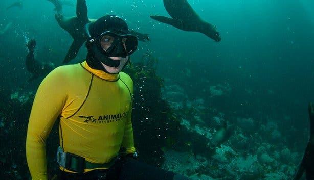 seal snorkeling guide