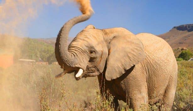 Elephant Aquila Game Reserve