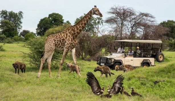Madiba Safari Strand