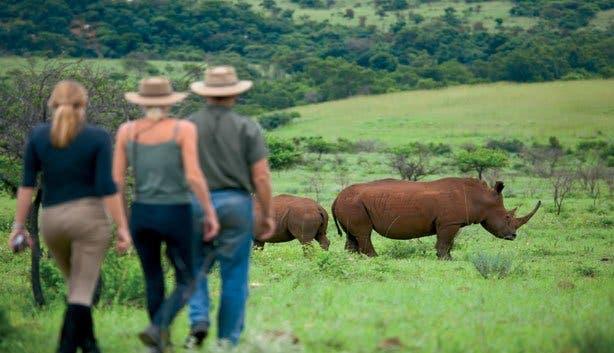 Madiba Safari