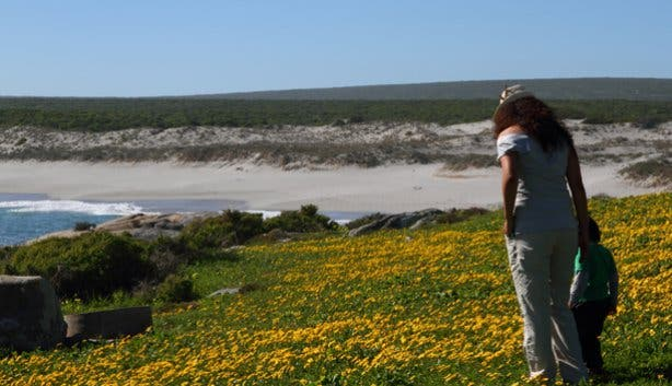 Spring Wild Flowers at West Coast NP Western Cape