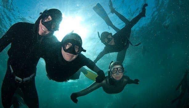 seal snorkeling underwater 2