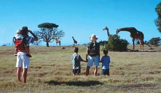 Madiba giraffe