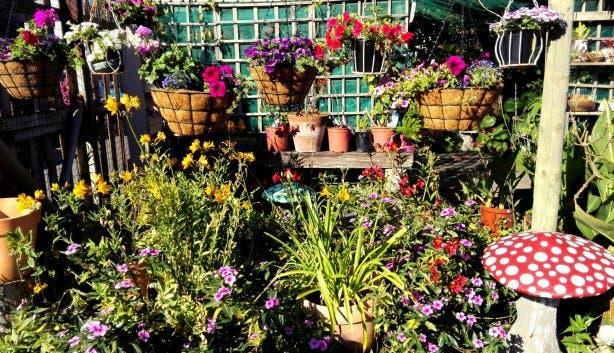 Kalk Bay Garden