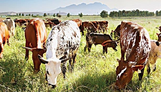 Biodynamic Farming at Spier wine estate