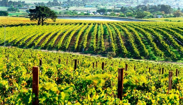 Vineyards at Saxenburg Winery Cape Town