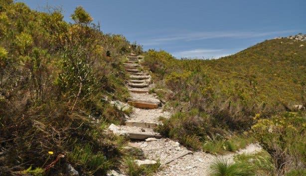 Fernkloof hike | Forrest | Hermanus
