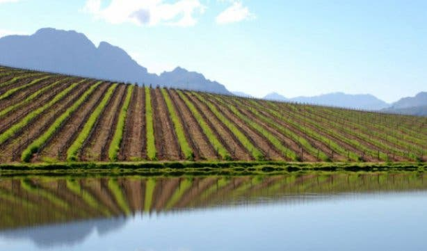 Stellenbosch Wine Festival 23 - 25 Feb 2018 - 3