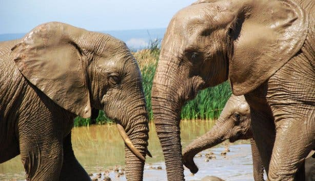 Addo Elephant Park | Safari South Africa