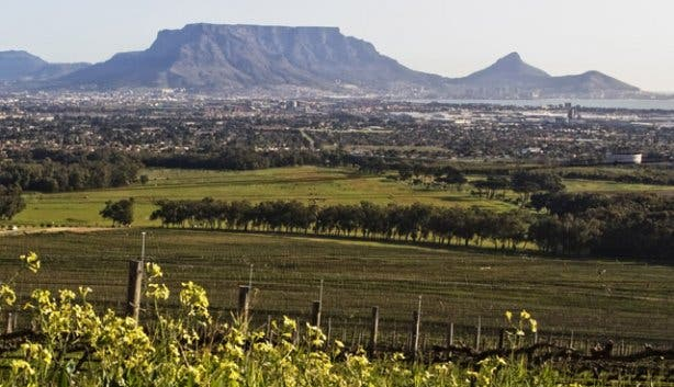 View from De Grendel wine farm