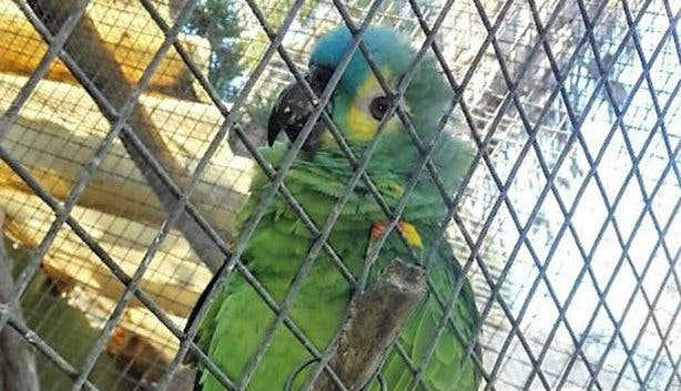 Vista Parties World of Birds 4