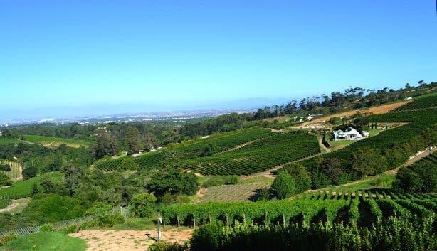 Wijnhuis Beau Constantia in Kaapstad