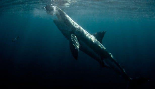 WSDC Shark Jumping 6