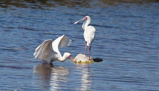 Bird life at West Coast National Park