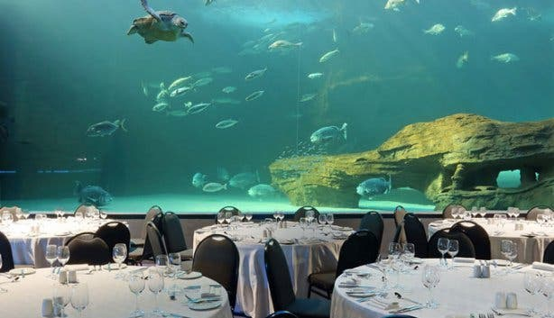 2 oceans aquarium i&j ocean exhibit dinner