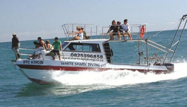 White Shark Diving Company Gansbaai