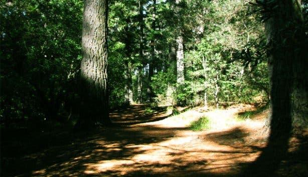Newlands Forrest 3