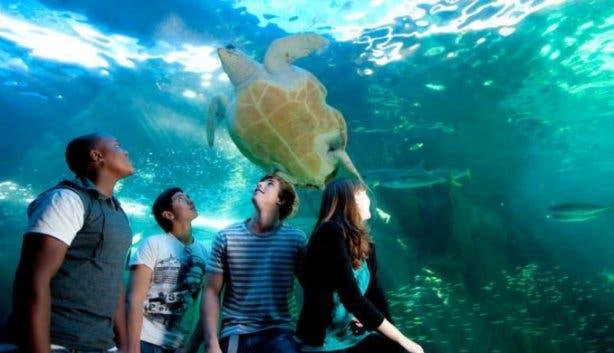 Two Oceans Aquarium Birthday Free
