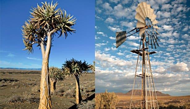 SANParks Tankwa NP Tree Windmill
