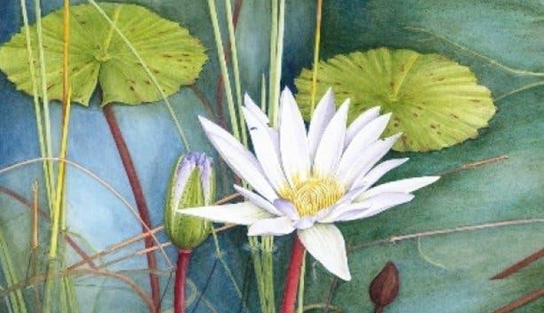 Kirstenbosch Flower Art 1