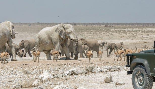 Safari Namibie en Zuid-Afrika