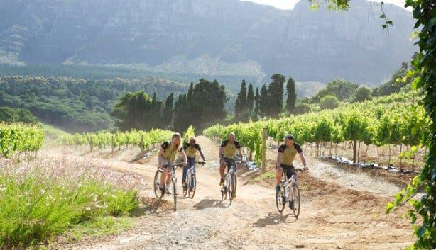Winelands-cycling-2.jpg