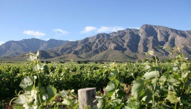 Vineyards in Nuy Valley in Worcester