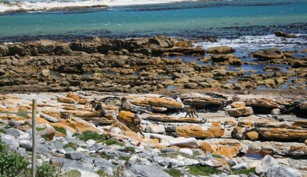 Hi Tec - Cape Point 6