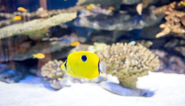 Vista Parties Aquarium Fish