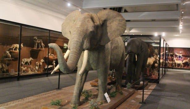 South Africa Museum Kapstadt Cape Town Photo: Elisabeth Thobe