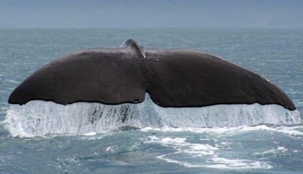 Hermanus-Whale-Festival-2