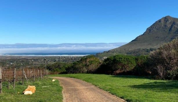 cape point vineyard 4