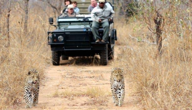 safarireizen zuid-afrika