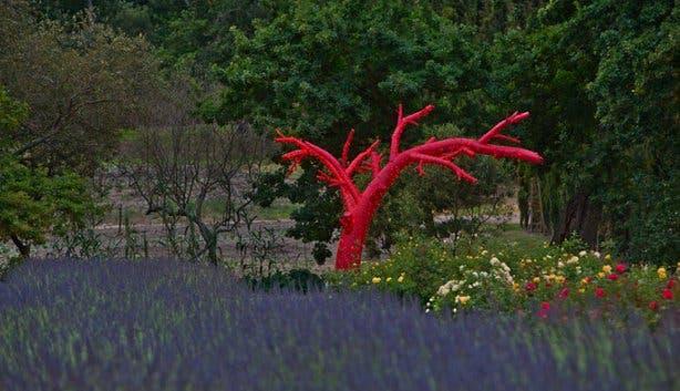 Peter Falke Wine Farm Gardens Stellenbosch
