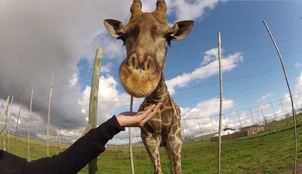 Giraffe House, Stellenbosch, kindvriendelijk