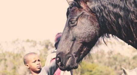 Show Your Support For Abandoned Horses At This Ultra Special Christmas Party