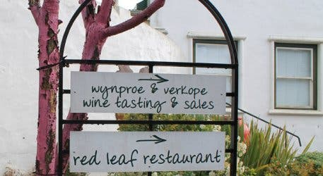 Wine tasting at the Red leaf eatery Beyerskloof