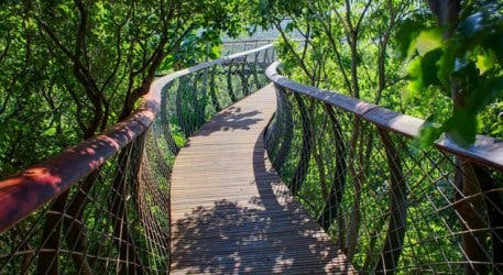 Aerial Walkway at Kirstenbosch