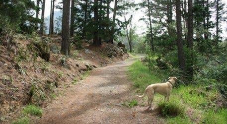 Newlands Forest Contour Path