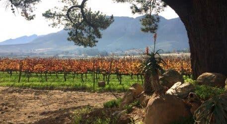 Haskell Winefarm