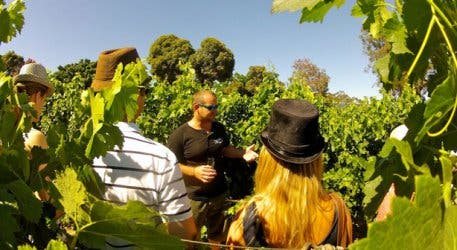 Wine Flies Wine Tours Cape Town