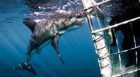 WSDC Shark 5
